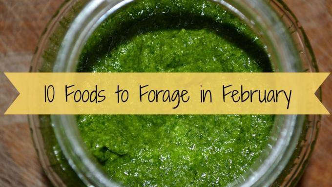 10 Foods to Forage in February