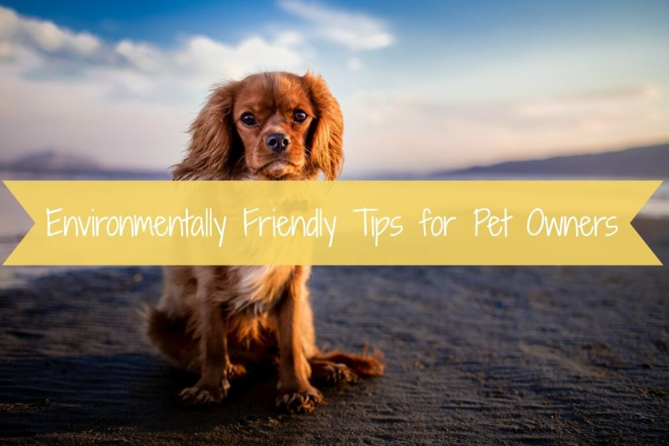 Environmentally Friendly Tips for Pet Owners