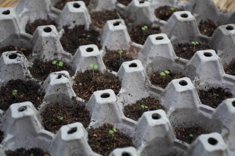 Egg carton seedling starters