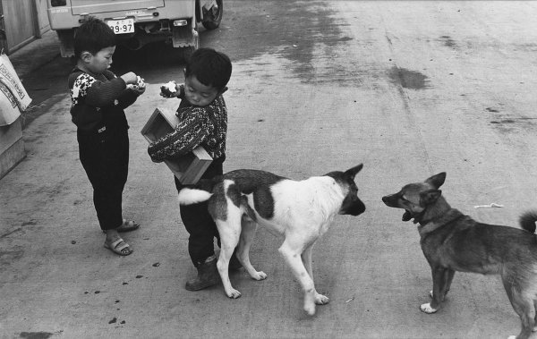 HCB_boys_and_dogs