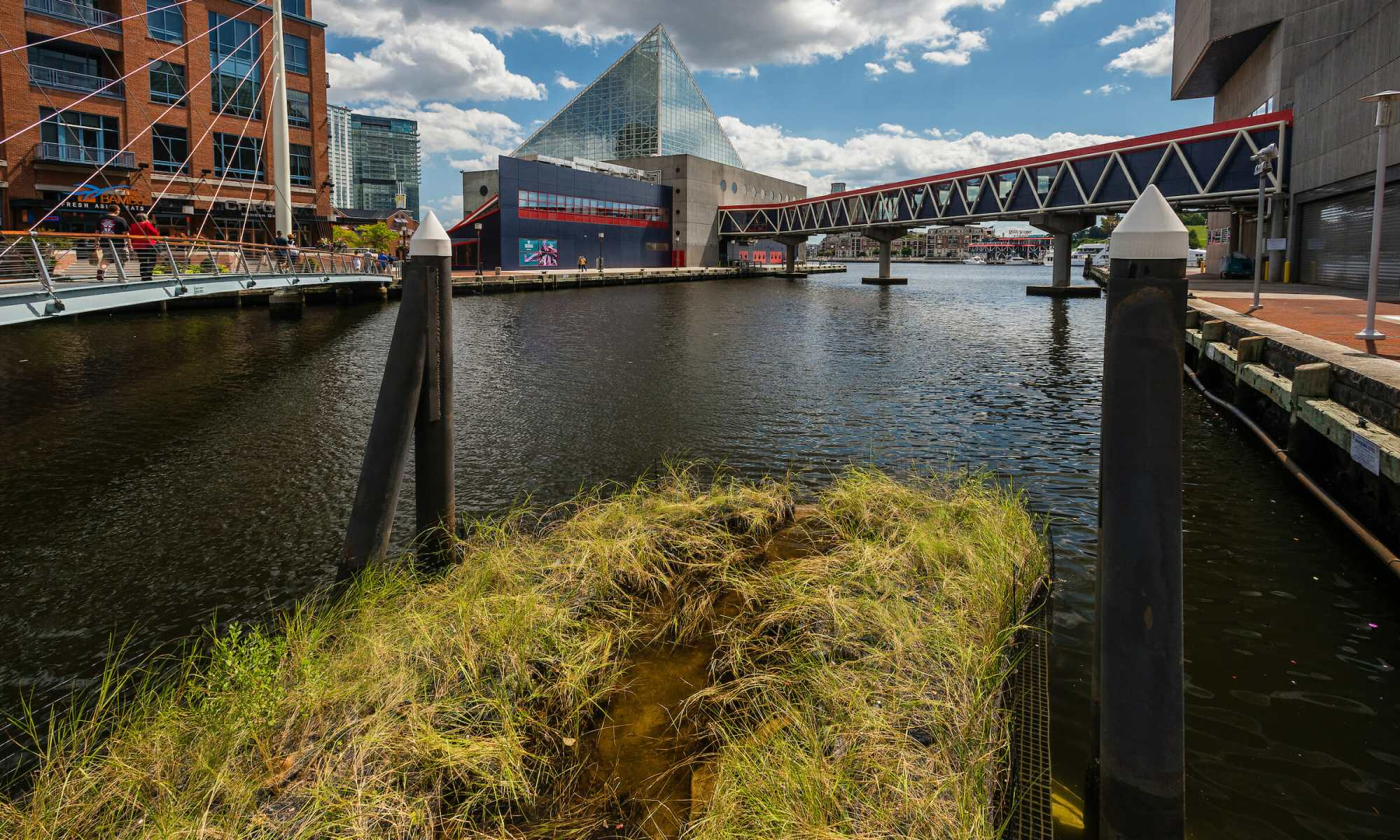 Bringing the Chesapeake Bay to Baltimore's Inner Harbor