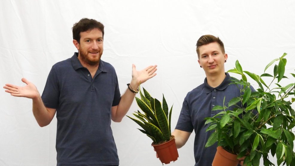 Zimmerpflanze kaufen, Haas Innengrün