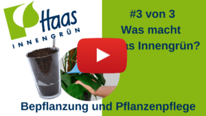 Bepflanzung und Pflanzenpflege