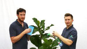 Pflanzen putzen - der Pflanzenblog