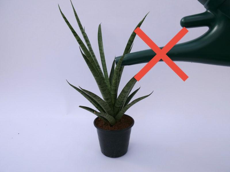 Blumen oder Pflanzen gießen - wie du richtig gießt, von oben oder unten?
