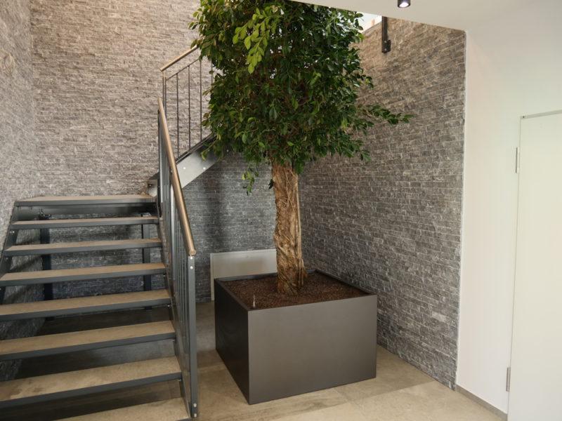 Eingangsbereich/ Treppenaufgang mit Pflanze Ficus - Haas Innengrün