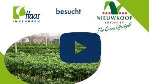 Niewkoop Europe - Haas Innengrün