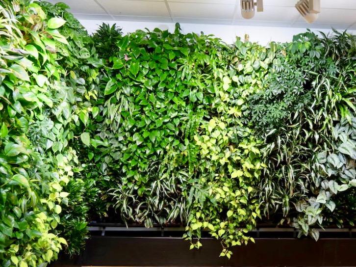Grüne Wand Natures Green - Haas Innengrün