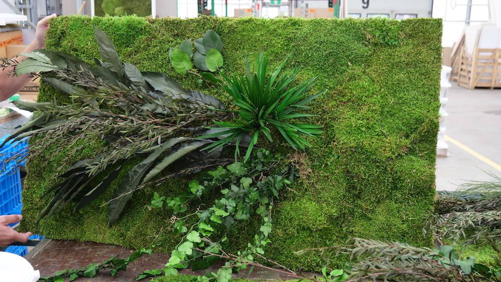 Mooswand, Moosbild mit Pflanzen- Haas Innengrün
