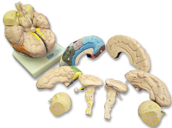 zkh240r-Brain 8 Parts
