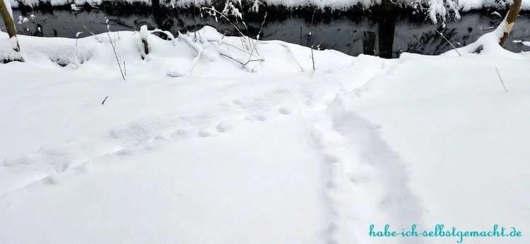 Winterwandern Goldsteig - Biber Spuren im Schnee