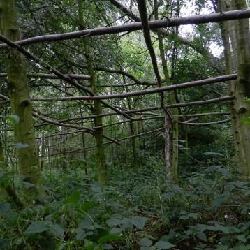 wilgenhout