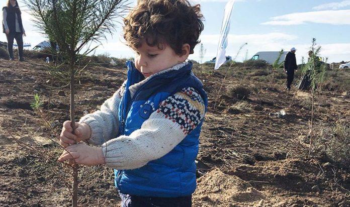 'Yeşil Dönüşüm Ormanları' Projesinin 3. etabı Avşa'da hayata geçti