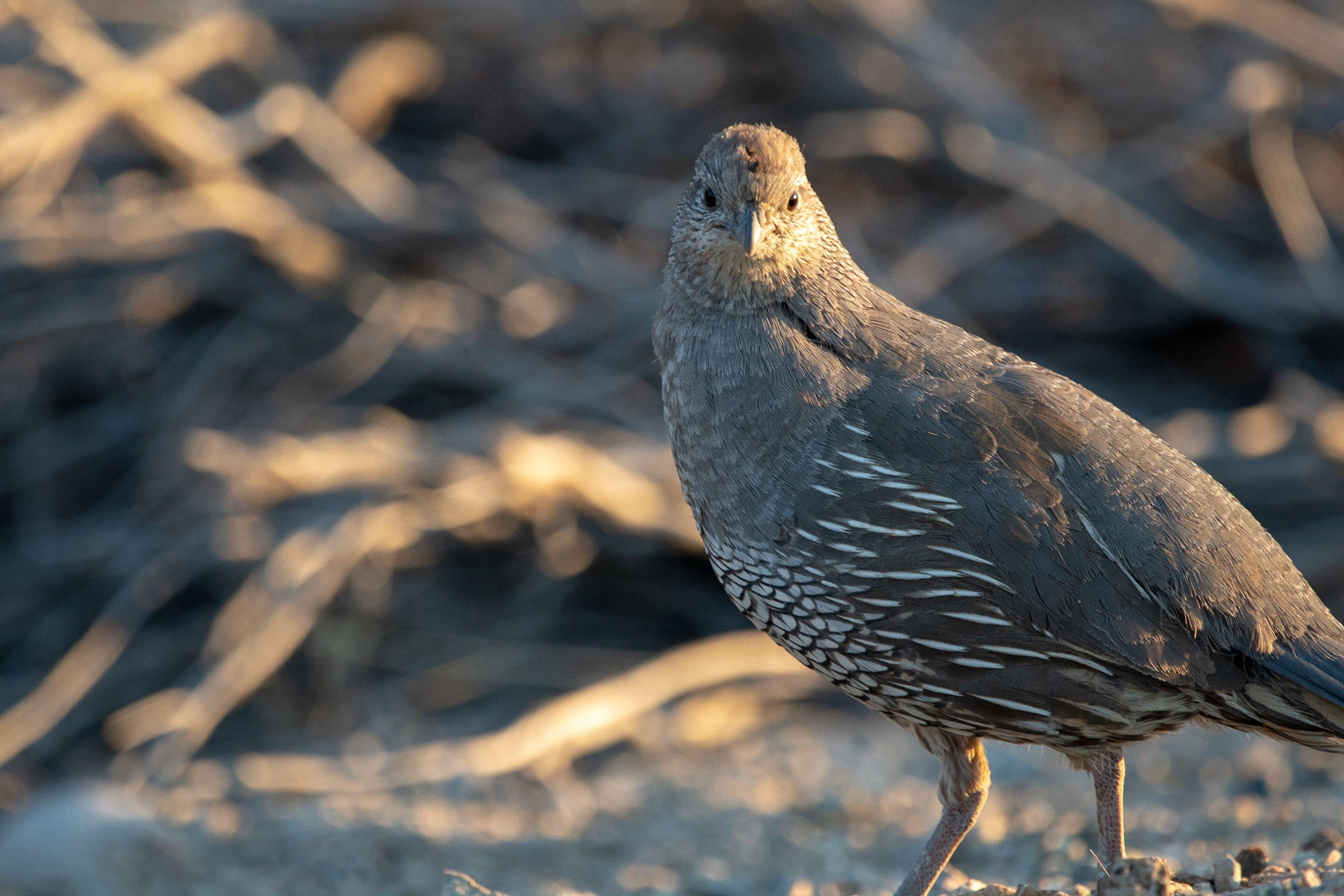 Güvercin besleyenlere 1000 euro para cezası