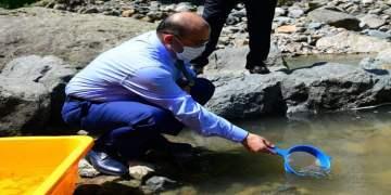 Trabzon Köprübaşı Deresi'ne 6 bin kırmızı benekli alabalık yavrusu bırakıldı