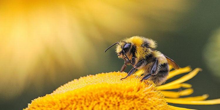 Bal arısının zehri meme kanseri hücrelerini yok etti