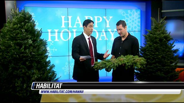40 Years of Christmas Trees in Hawaii