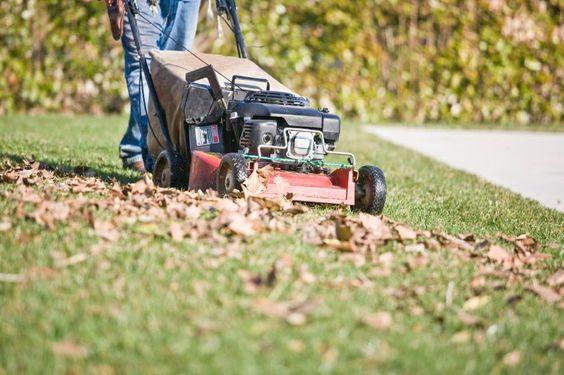 Servicios de jardineria empresa de limpieza - Servicios de jardineria ...