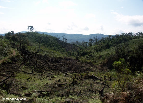 the disappearing rainforests Every year an area of the rainforest the size of the state of new jersey is cut  down and destroyed the plants and animals that used to live in.