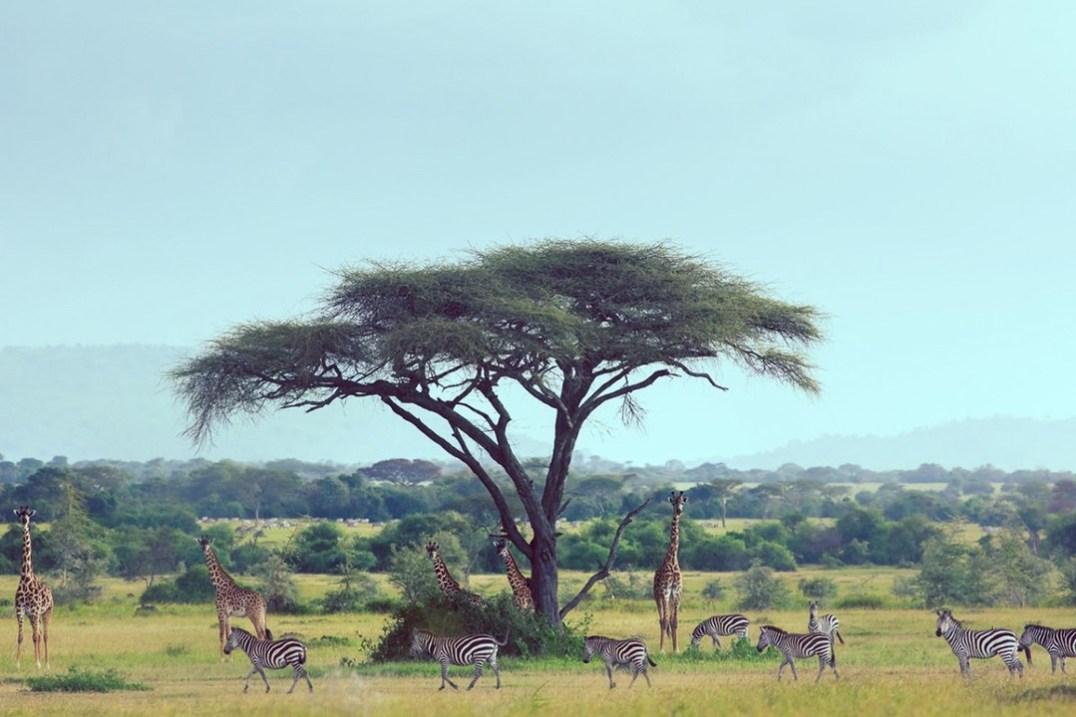 Singita-Serengeti-House-Wildlife9