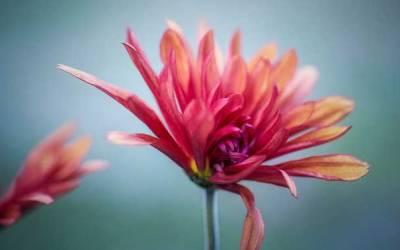 El reto de la transformación: Día 8 – Perdonar para llegar al amor, la paz y la alegría