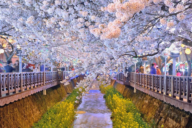 2021 Best Cherry Blossom Spots in Korea