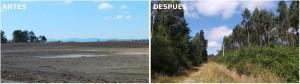 El antes, un paisaje yermo, y el después, un frondoso bosque, de la recuperación de la mina de cobre de Touro.