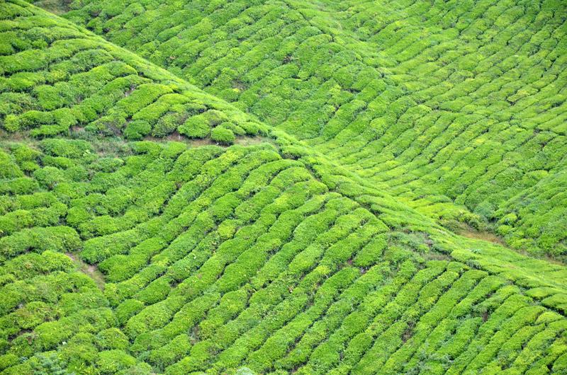 Agricultura Moderna Agricultura En Laderas