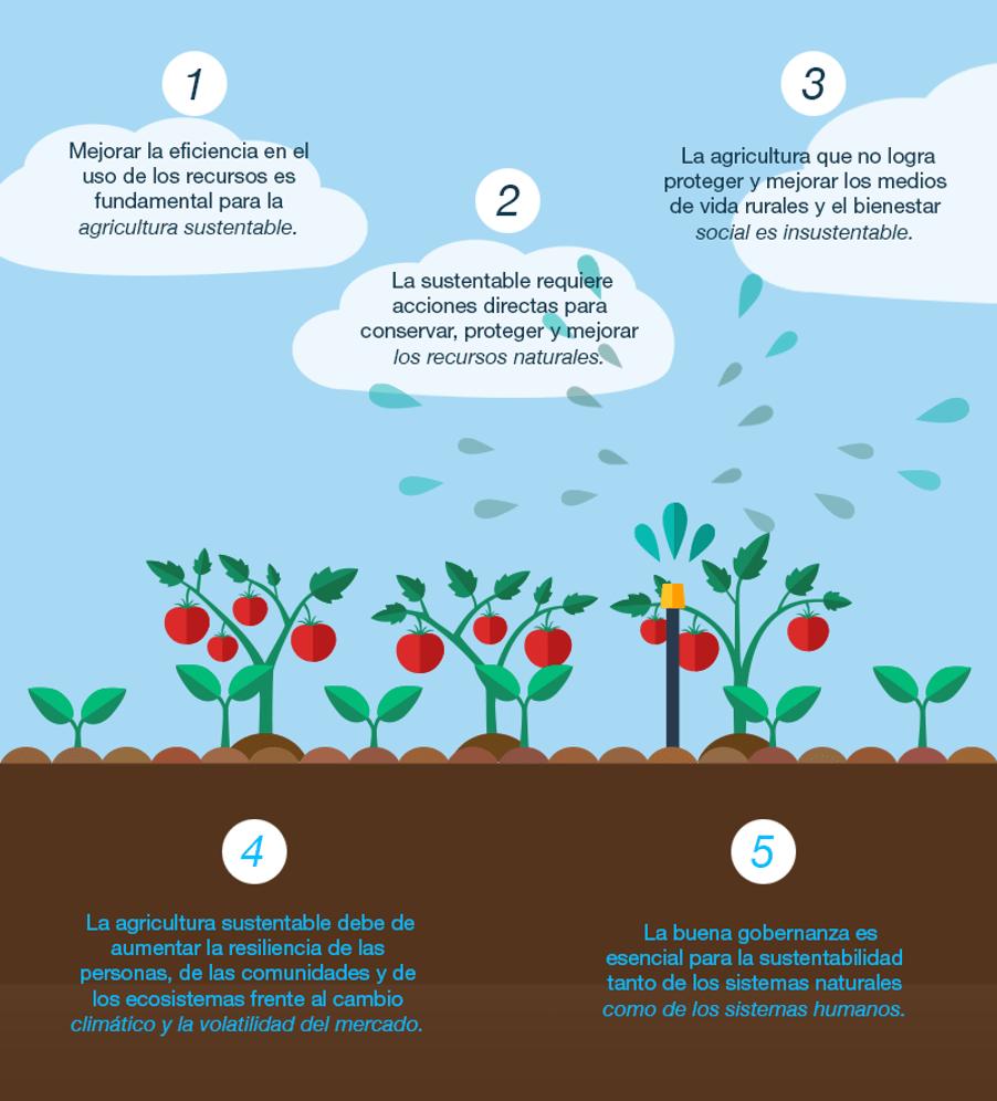 Indicadores de sustentabilidad en la agricultura