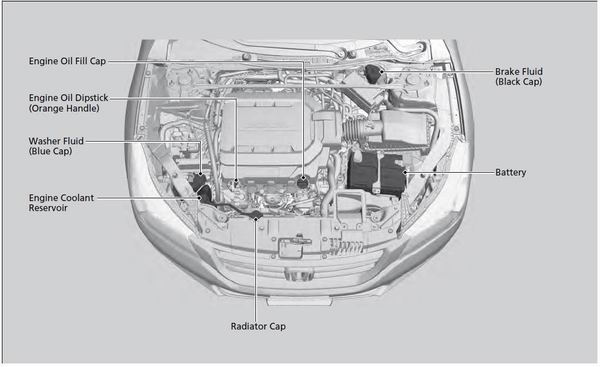 Honda Accord: Maintenance Items Under the Hood