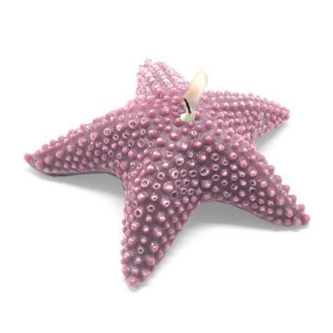 Estrella de mar esponjosa
