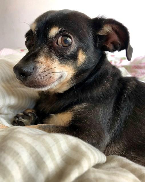 Barkley - Lauren's dog