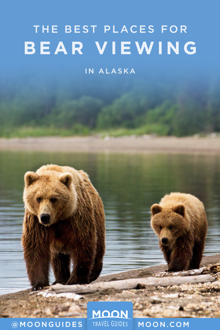 bear viewing alaska pinterest graphic