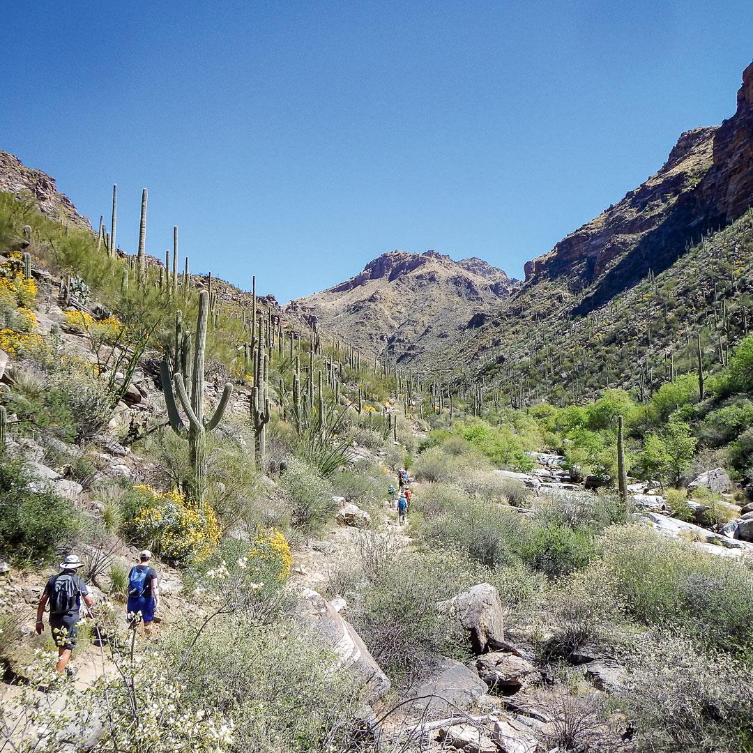 people hiking through desert landscape in Sabino Canyon
