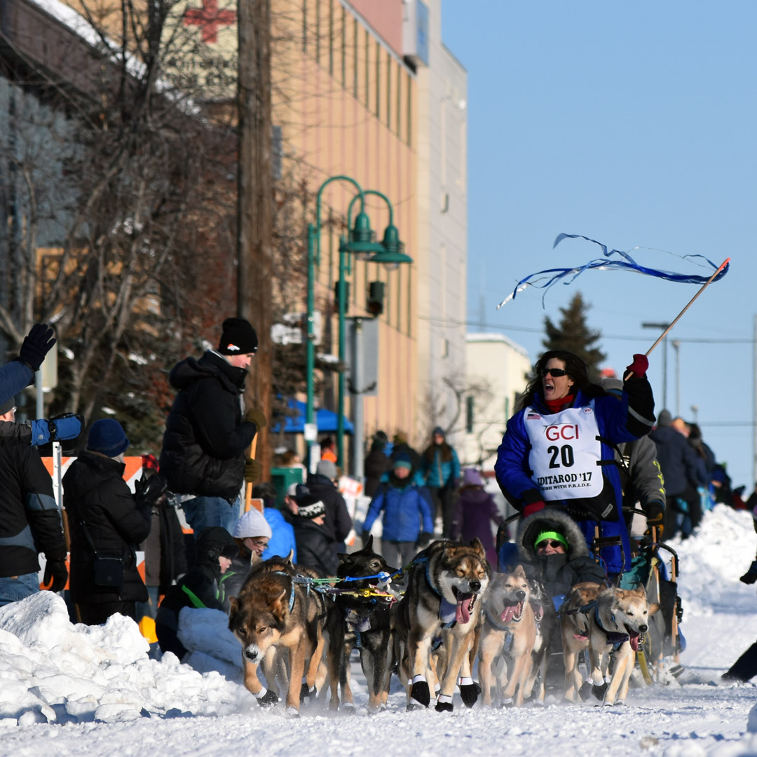 sled dog racing in the Iditarod in Alaska