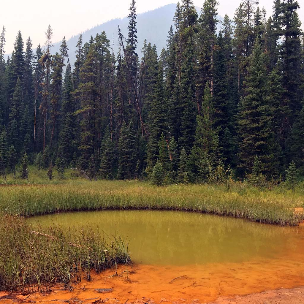 A small mineral pool in a grassy meadow with a rust-red bank.