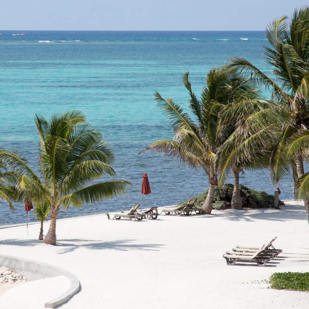 white sand beach with palm trees on Ambergris Caye