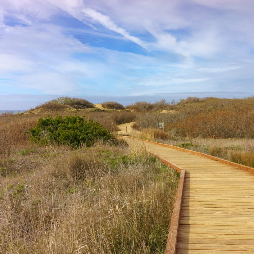 wooden walkway through coastal grassland under a blue sky