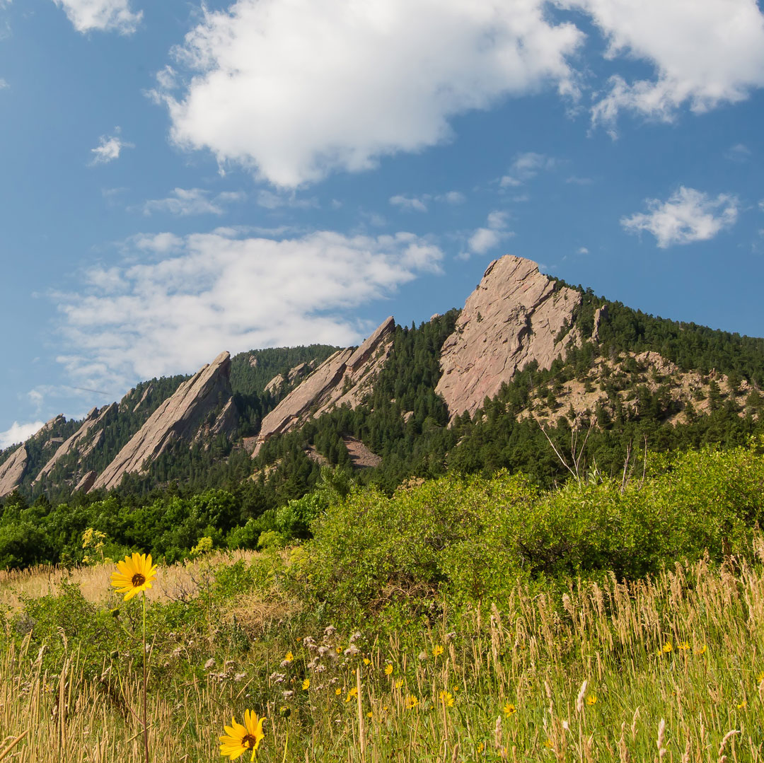 field of flowers underneath the Flatirons