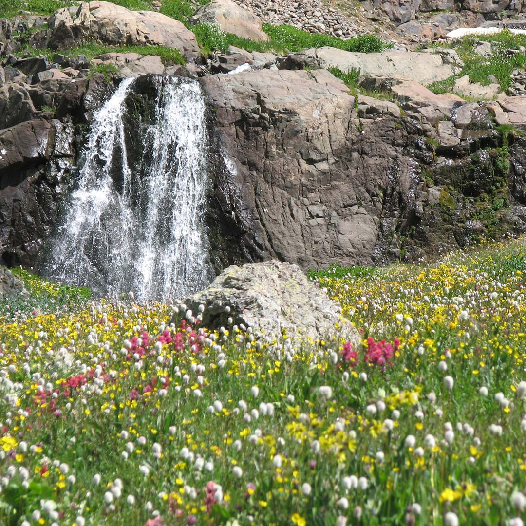 waterfall surrounded by yellow, red, and white wildflowers
