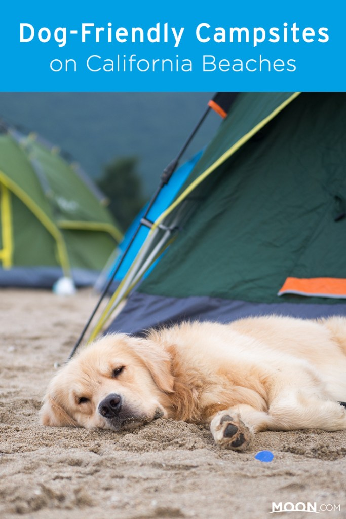 dog laying on a beach pinterest graphic.