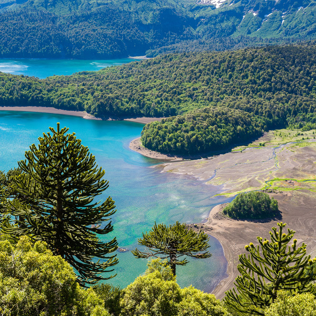 aerial view of forest and lake in Conguillio National Park in Chile