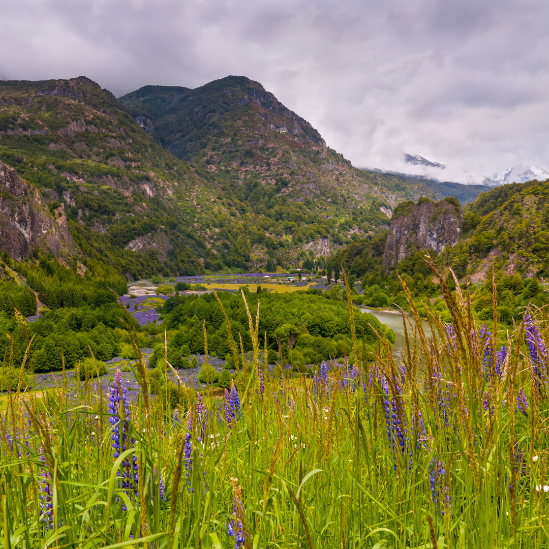 wildflowers in a national reserve near Coyhaique