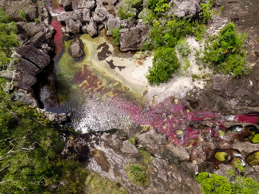 aerial shot of Cano Cristales in Colombia showing vibrant colors in the water