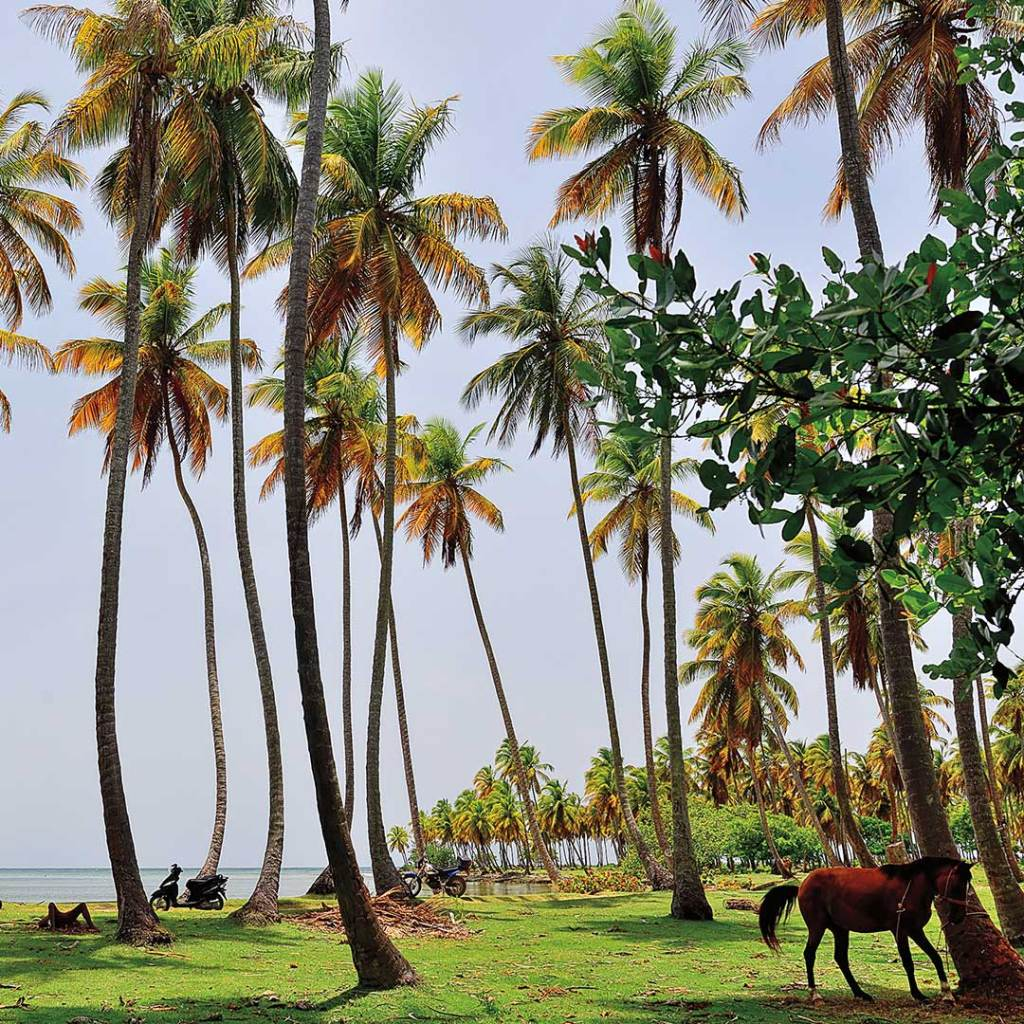 a horse standing in a grove of palm trees