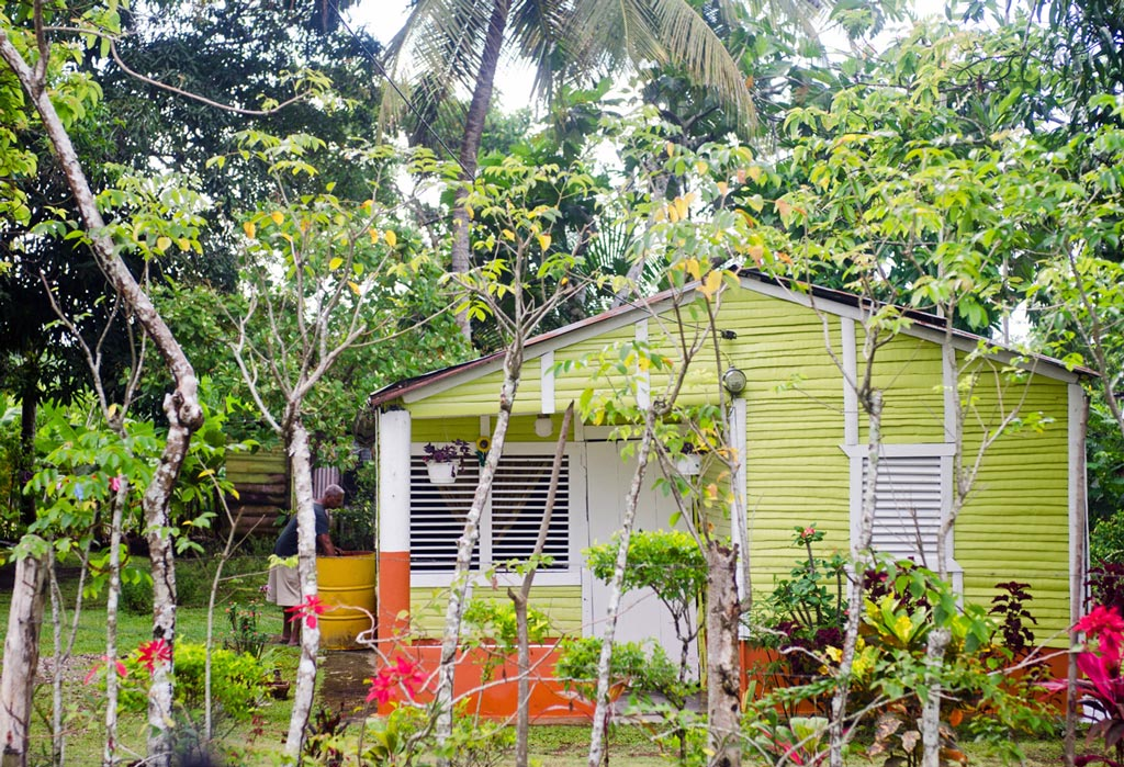 bright yellow house surrounded by trees and plants