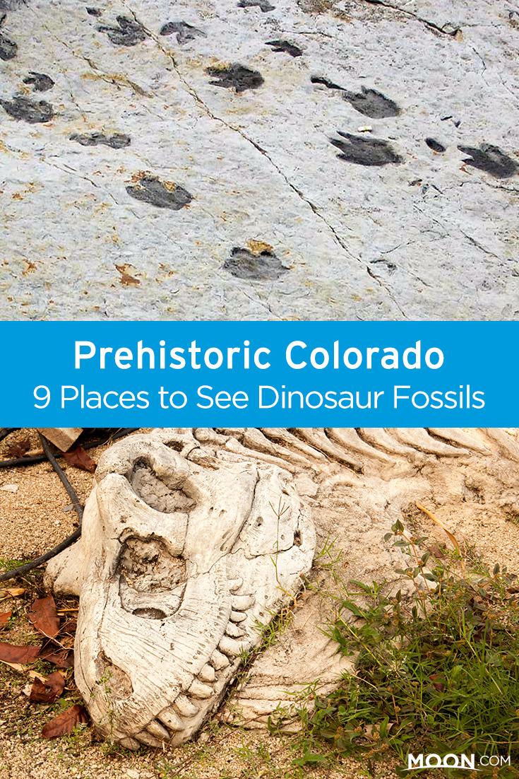 colorado fossil locations pinterest graphic