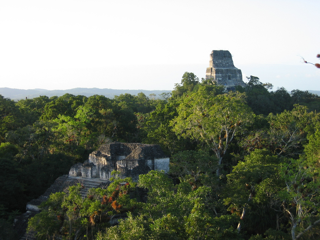 View of temple ruins rising up amongst dense trees.