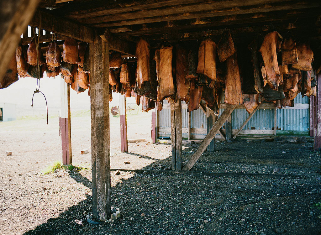 Large chunks of hakarl, or fermented shark meat, hung to dry.