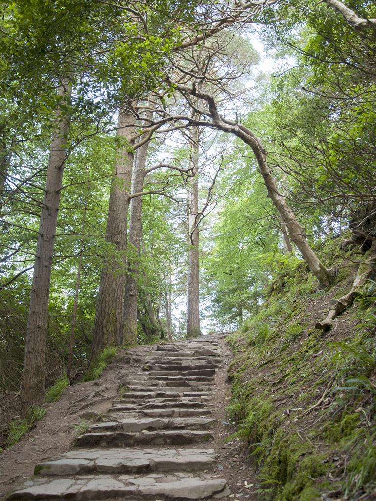 stone steps on a hiking trail surrounded by trees in Killarney National Park